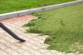 Expulsion of grass — Stock Photo