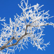 Frost and sun - wonderful day — Stock Photo