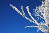 White crystals — Stock Photo