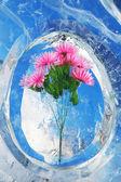 Buz çiçeği — Stok fotoğraf