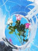 Roses in ice — Stock Photo