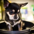 Stock Photo: Depp fried chihuahua