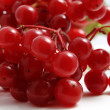 Berries of red Viburnum. — Stock Photo #31487973