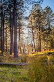Traquill Woods — Стоковое фото
