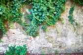Rural wall — Stock Photo