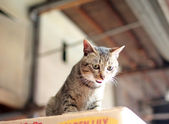 Cat in the city — Stock Photo