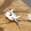 The gulls fright for food in Green Lake garden in Kunming — Foto de Stock