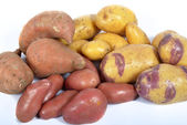 Four varieties of potatoes — Stock Photo