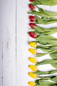 Tulips on white wooden planks eves — Stock fotografie