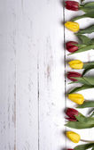 Tulips on white wooden planks eves — Foto de Stock