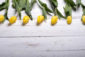 Tulips on white wooden planks eves — Stock Photo