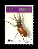 Hmyzu beetle.lucanus jelena cervus — Stock fotografie