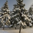 Stock Photo: Winter time - beauty in nature