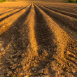 Ploughed Field — Stock Photo #34653633
