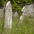 Overgrown Graveyard, Summer — Stock Photo #34653895