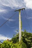 Old Telegraph Pole — Stock Photo