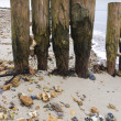 Stock Photo: Weathered and worn wooden groynes with pebbles jammed between th