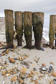 Weathered and worn wooden groynes with pebbles jammed between th — Stock Photo