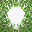 Bodhi Leaf Shape — Stock Photo