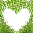 Bodhi Leaf Heart — Stock Photo