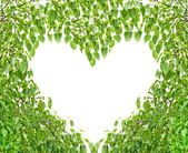 Bodhi Leaf Heart — Foto Stock