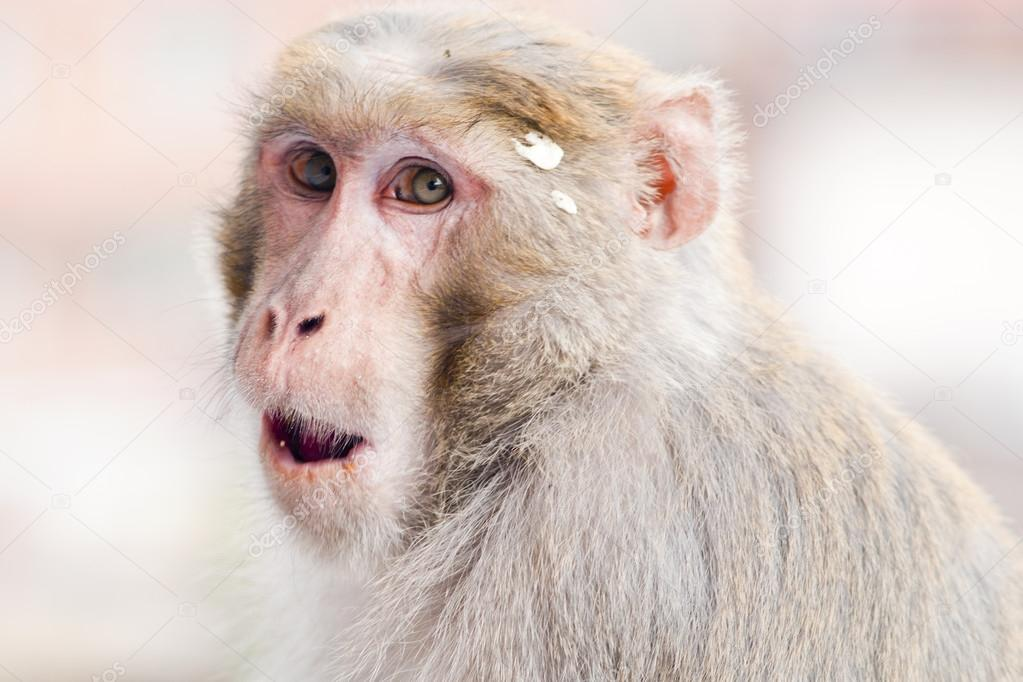 Monkey Making Funny Face Monkey Making Moking And Funny