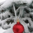 Red Christmas-tree decoration and blue Christmas fur-tree — Stock Photo