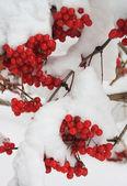 Kar altında çilek ile kartopu — Stok fotoğraf