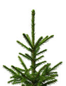 Young fir-tree isolated on a white background — Stock Photo
