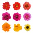 Set flowers: sunflower, nasturtium, aster, dahlia, petunia, zinnia, marigold flower isolated on white background — Stock Photo