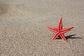 Red starfish on sand — Stock Photo