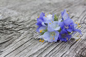 Bluebells  on an old wooden background — Stock Photo