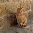 A street orange cat near the old wall. — Stock Photo