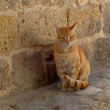A street orange cat near the old wall. — Stock Photo #37243127