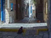 Street cats of ancient Jaffa — Stock Photo