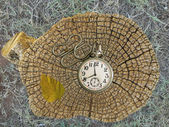 Old pocket watch and rings of a tree stump — Stock Photo