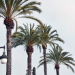 Palms and lamps alternate along the promenade — Stock Photo