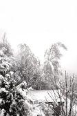 Padający śnieg pochyla się dwa drzewa brzoza — Zdjęcie stockowe