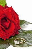 Bright red Rose with a Diamond Ring — Stock Photo