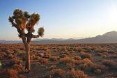Beautiful desert at sunset — Foto de Stock