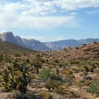 Nevaddesert — Stock Photo #30265285