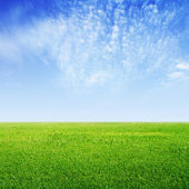 Grass and blue sky — Stock Photo
