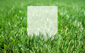 Gras und Blankopapier — Stockfoto