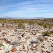 Nevada desert — Stock Photo