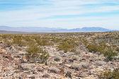 Nevada desert — Stock Photo
