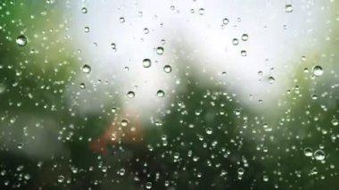 Beautiful rain drops — Stock Video
