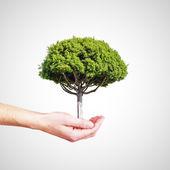 Hand holding tree — Stock Photo