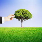 Hand puts tree — Stock Photo