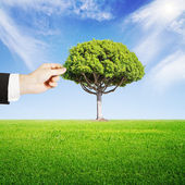 Hand puts tree — Stock Photo