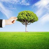Hand puts tree — Foto Stock